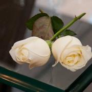 Servizio-fotografico-matrimonio-low-cost-due rose gialle incrociate poste su di un tavolo in cristallo