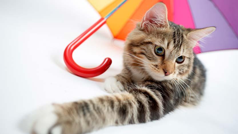 Gattino con ombrello colorato