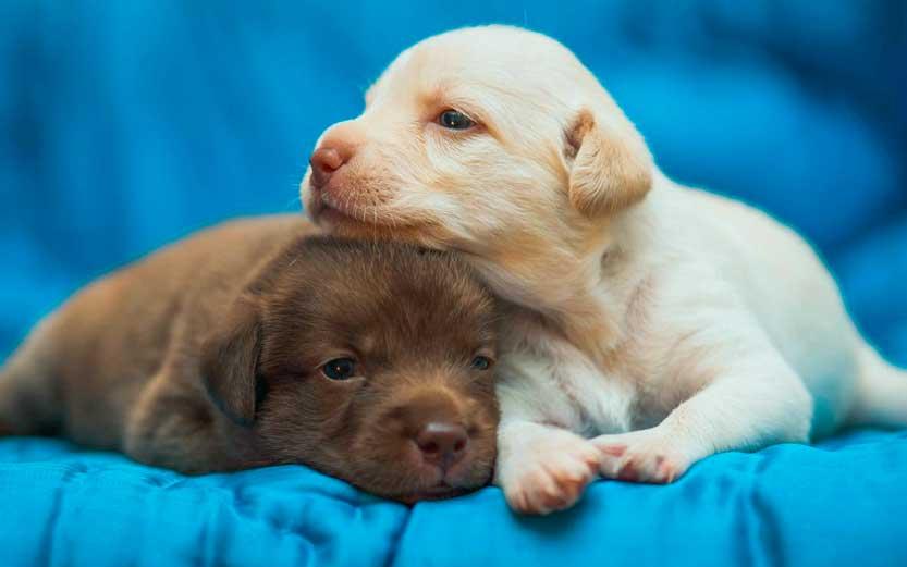 Fotografare animali domestici come una coppia di cuccioli